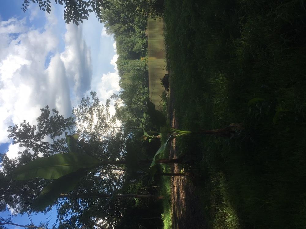 Aire camping-car à Castelnau-de-Lévis (81150) - Photo 8